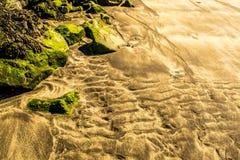 Scultura del mare Fotografie Stock Libere da Diritti