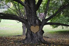 Scultura dell'albero Immagine Stock