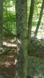 Scultura dell'albero Fotografie Stock