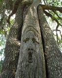 Scultura dell'albero di quercia - fiume di Suwannee Immagine Stock Libera da Diritti