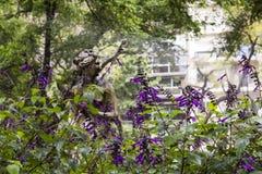 Scultura della crisalide fra le piante della lavanda in fioritura Fotografia Stock Libera da Diritti