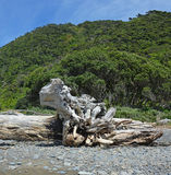 Scultura di legno della deriva sulla spiaggia Nuova Zelanda dell'isola di Kapiti fotografie stock