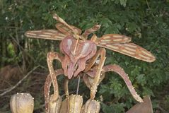 Scultura di legno della mosca Immagine Stock