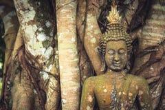 Scultura di pietra muscosa di Buddha fra i tronchi e le radici di albero del banyan come fondo di viaggio dell'Asia fotografie stock
