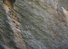 Scultura preistorica del petroglifo del bue di Qobustan immagini stock