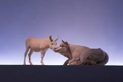 Scultura, scolpente, sculp, marmo, animali, statua, immagine, mucca, bovino, bue, toro, asino, mulo immagini stock libere da diritti