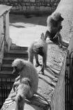 Sculture della scimmia alla torre di Londra Immagine Stock Libera da Diritti