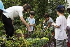 Scuola dei bambini e dell'insegnante che impara giardinaggio di ecologia fotografie stock libere da diritti