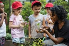 Scuola dei bambini e dell'insegnante che impara giardinaggio di ecologia immagine stock