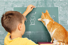 Scuola del gatto fotografia stock libera da diritti