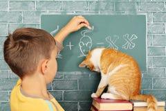Scuola del gatto Fotografia Stock