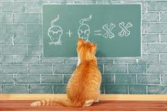 Scuola del gatto Immagini Stock Libere da Diritti