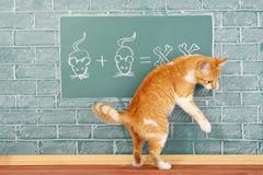 Scuola del gatto Immagine Stock