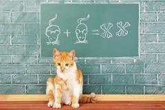 Scuola del gatto Immagine Stock Libera da Diritti