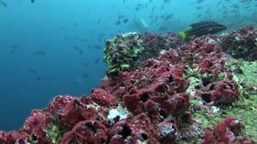 Scuola del pesce in Galapagos archivi video