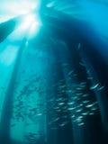 Scuola del pesce sotto il molo con il raggio di sole fotografia stock