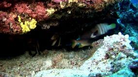Scuola del pesce subacquea su fondo del fondale marino del sole di riflessione in Maldive video d archivio