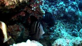 Scuola del pesce subacquea su fondo del fondale marino del sole di riflessione in Maldive archivi video