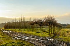 Scuola materna degli alberi del viale nella stagione invernale Immagine Stock Libera da Diritti