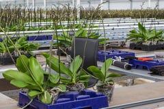 Scuola materna della panoramica delle orchidee Immagini Stock