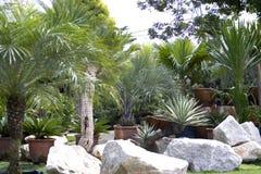 Scuola materna della pianta tropicale Immagini Stock