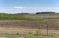 Scuola materna della pianta vicino a Sandy Oregon Fotografie Stock
