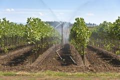 Scuola materna della pianta vicino a Sandy Oregon Fotografia Stock Libera da Diritti