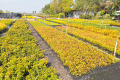 Scuole materne dell'Oregon e piante del semenzale Fotografia Stock Libera da Diritti