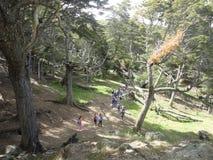 Scurcion d'usines et d'arbres de forêt Image stock