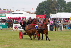 Scurry pony racing Stock Photography