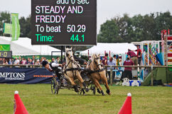 Scurry racing in the arena Royalty Free Stock Images
