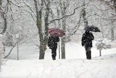 Scurry van sneeuw Stock Afbeeldingen