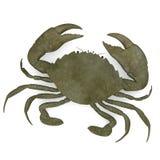 Scylla serrata (crab) Royalty Free Stock Photography