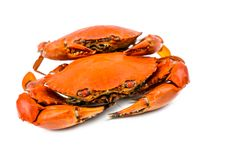 Scylla serrata. Two steamed crab on white background with copy space. Seafood restaurants concept stock image