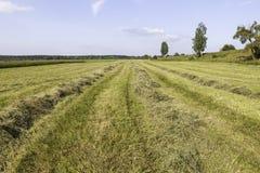 Scythed gräsfält Fotografering för Bildbyråer