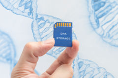 SD memory card with hand and finger hold isolate on white backgr Stock Photography