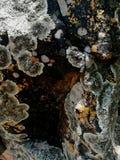 Algae. Sdr algae rock moss nature stock photos