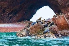 Södra - amerikanska sjölejon som kopplar av på, vaggar av Ballestas öar i den Paracas nationalparken, Peru. Royaltyfri Foto