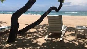 Sdrai sulla spiaggia tropicale dell'isola di Bali, Indonesia archivi video