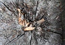 Seção da árvore Fotos de Stock