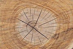 Seção da madeira Fotos de Stock
