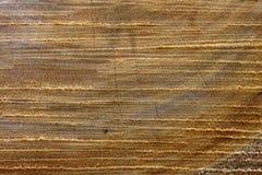 Seção da textura e do fundo de uma árvore Foto de Stock Royalty Free