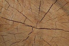 Seção de logs do pinho Imagem de Stock