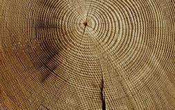 Seção de madeira fotografia de stock royalty free
