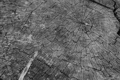 Seção de uma árvore velha Imagens de Stock Royalty Free