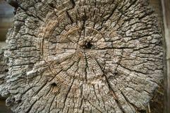 Seção de uma árvore velha, madeira Foto de Stock
