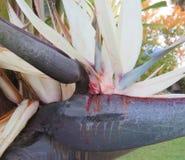 Seção de uma flor do Strelitzia Fotos de Stock Royalty Free