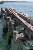 Seção do cais de madeira velho com gaivotas do assentamento fotos de stock
