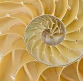 Seção do escudo do nautilus Fotografia de Stock Royalty Free