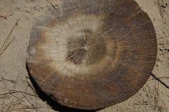 Seção do pinheiro Imagem de Stock Royalty Free